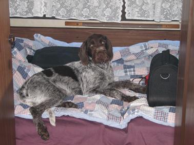 2009coral-beste-hund