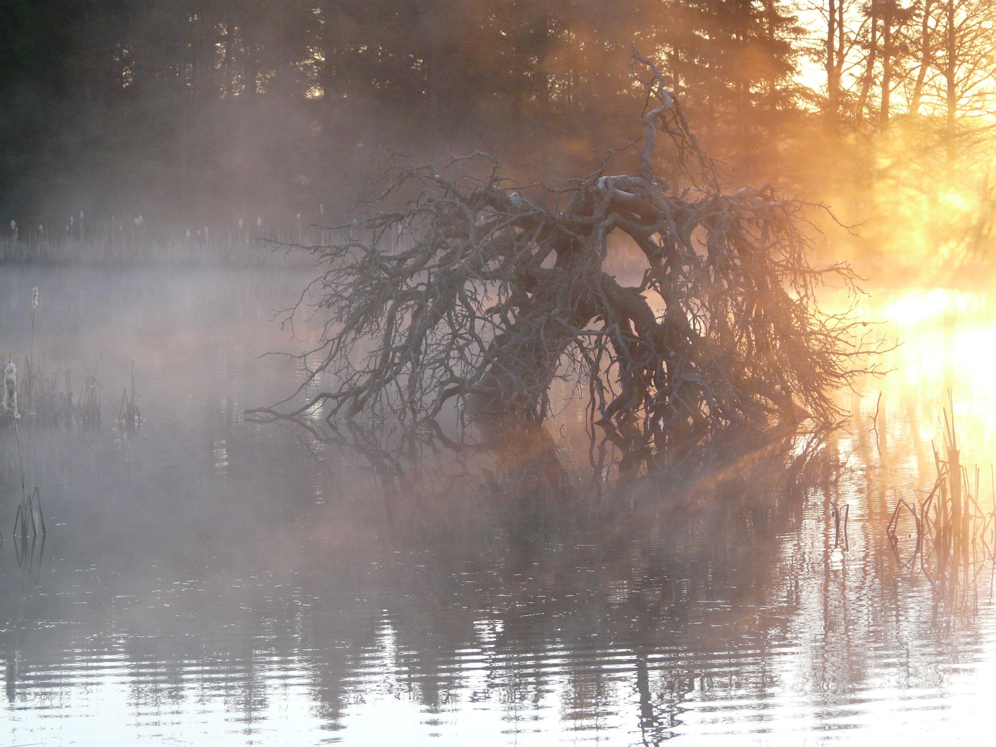 en-tidig-morgon-by-anki-e